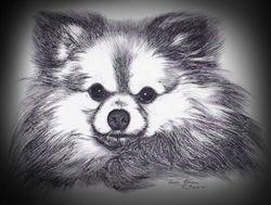 Muffin's Portrait