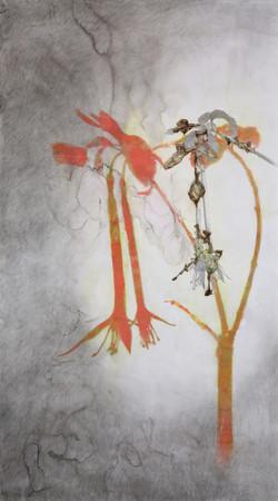 Le portrait des plantes, Ma belle