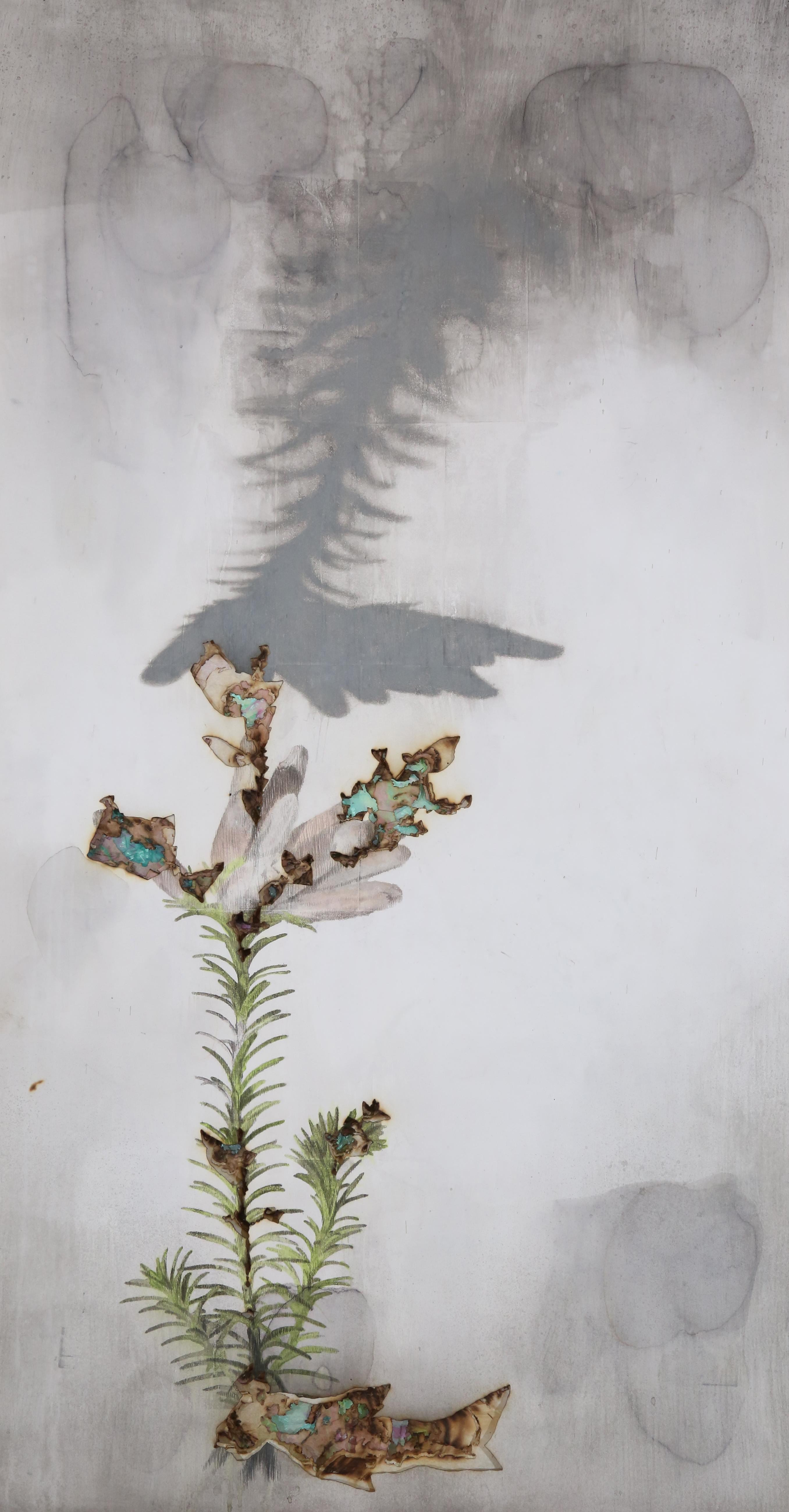 Le portrait des plantes,Erica