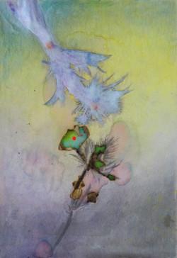 Le portrait des plante, Chardon