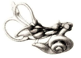 labirinto (1).jpg