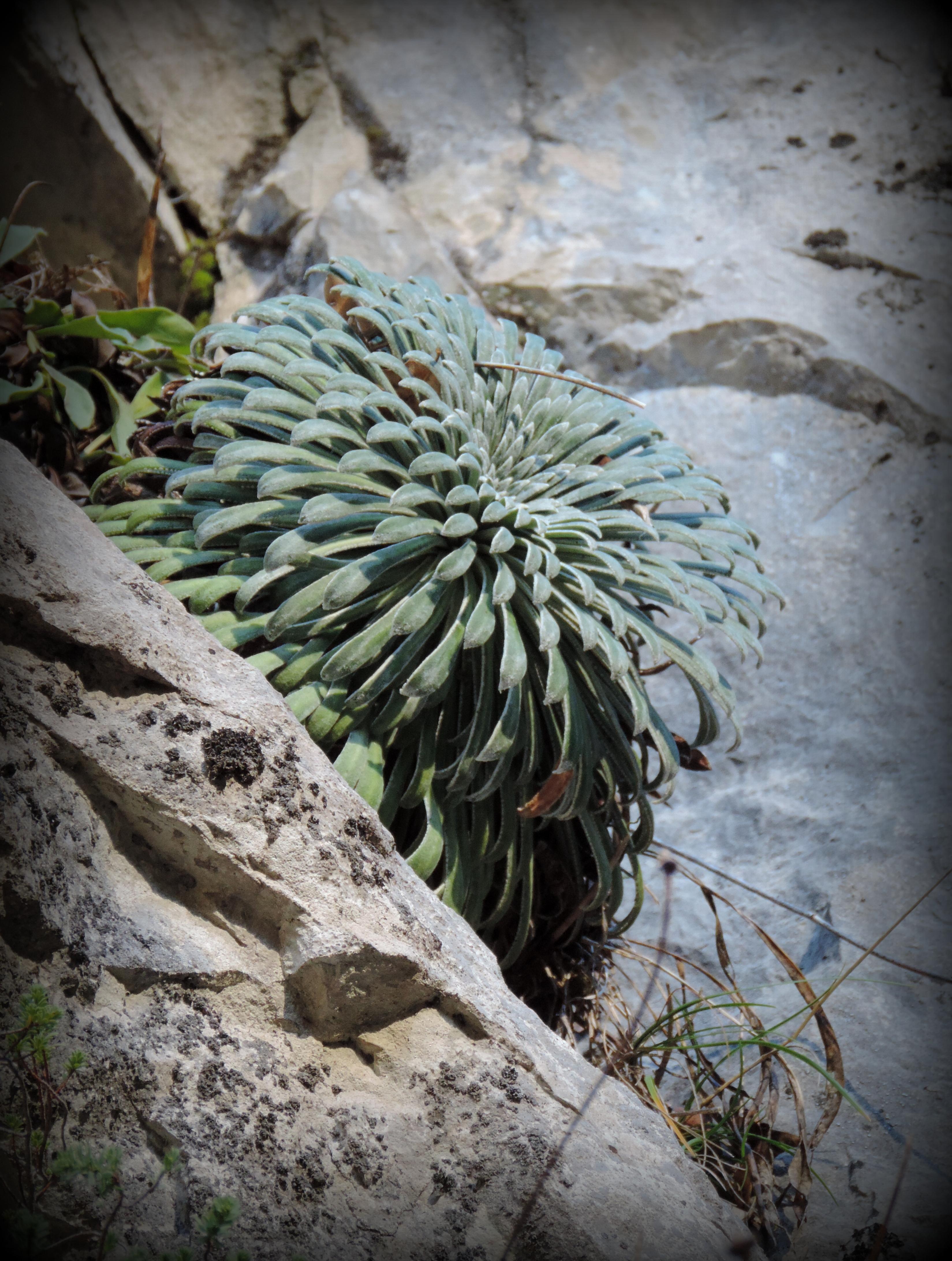 Succulente | Vincent Fontan