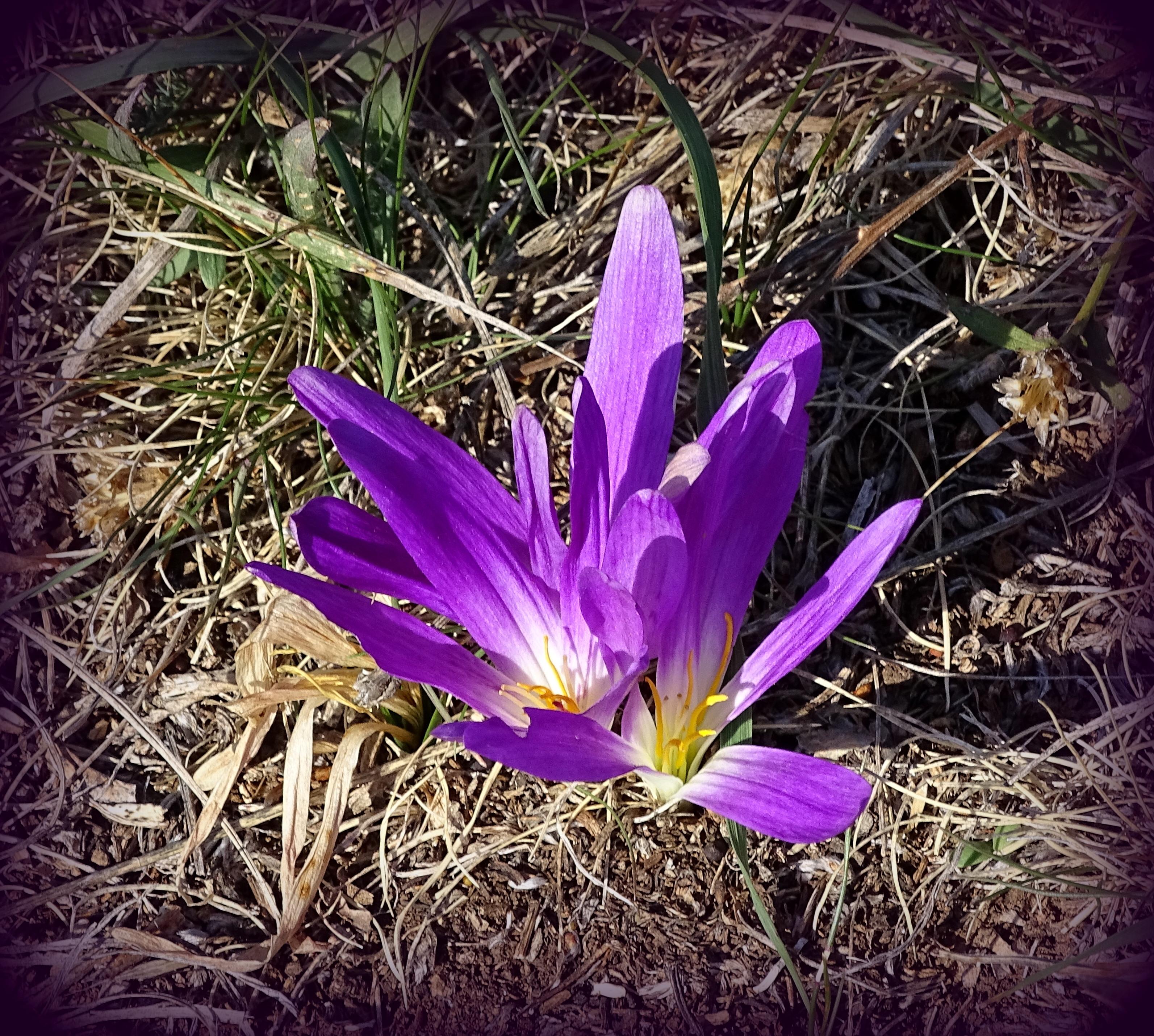 Fleure violette | Vincent Fontan