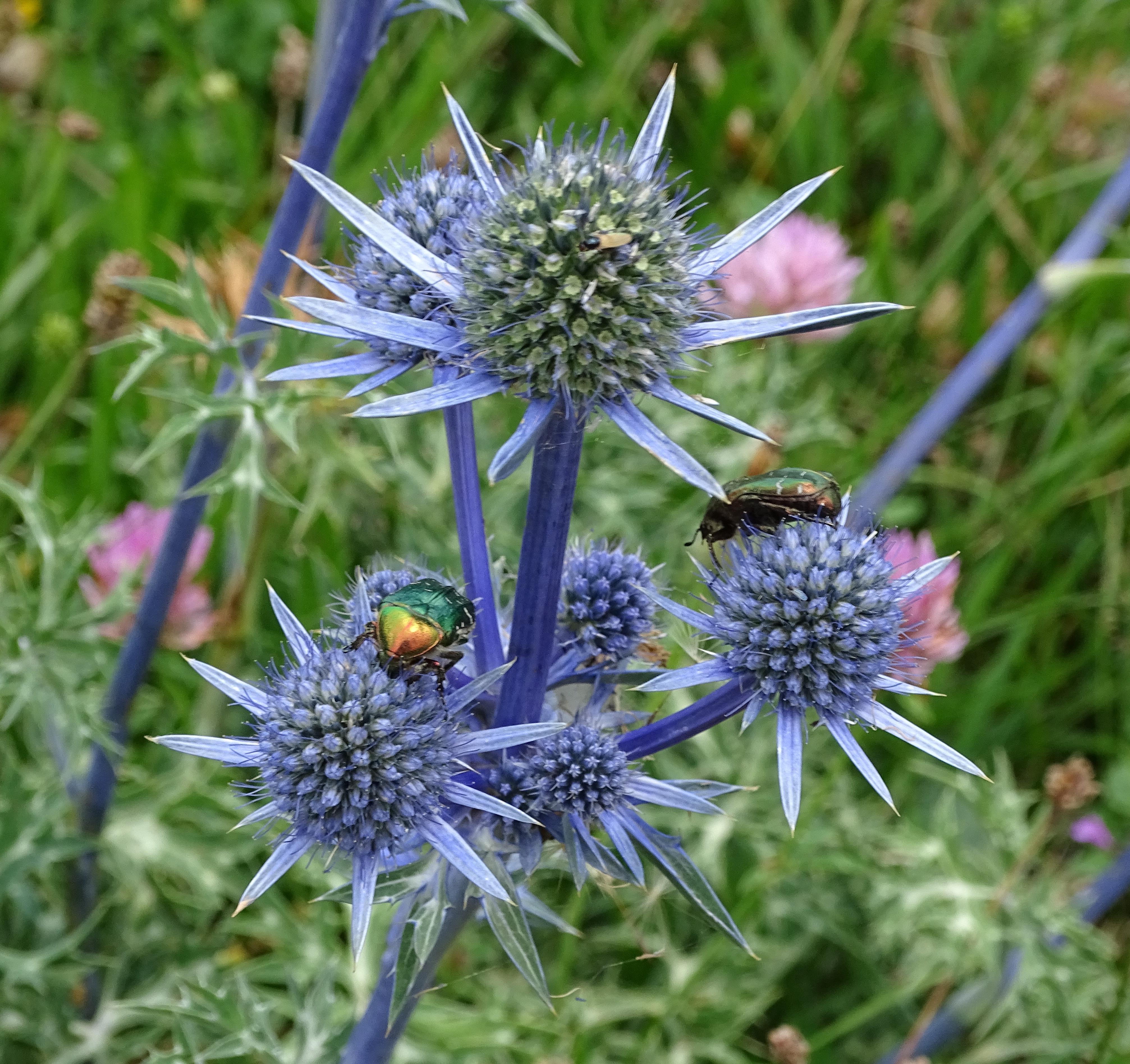 Fleure et insecte | Vincent Fontan