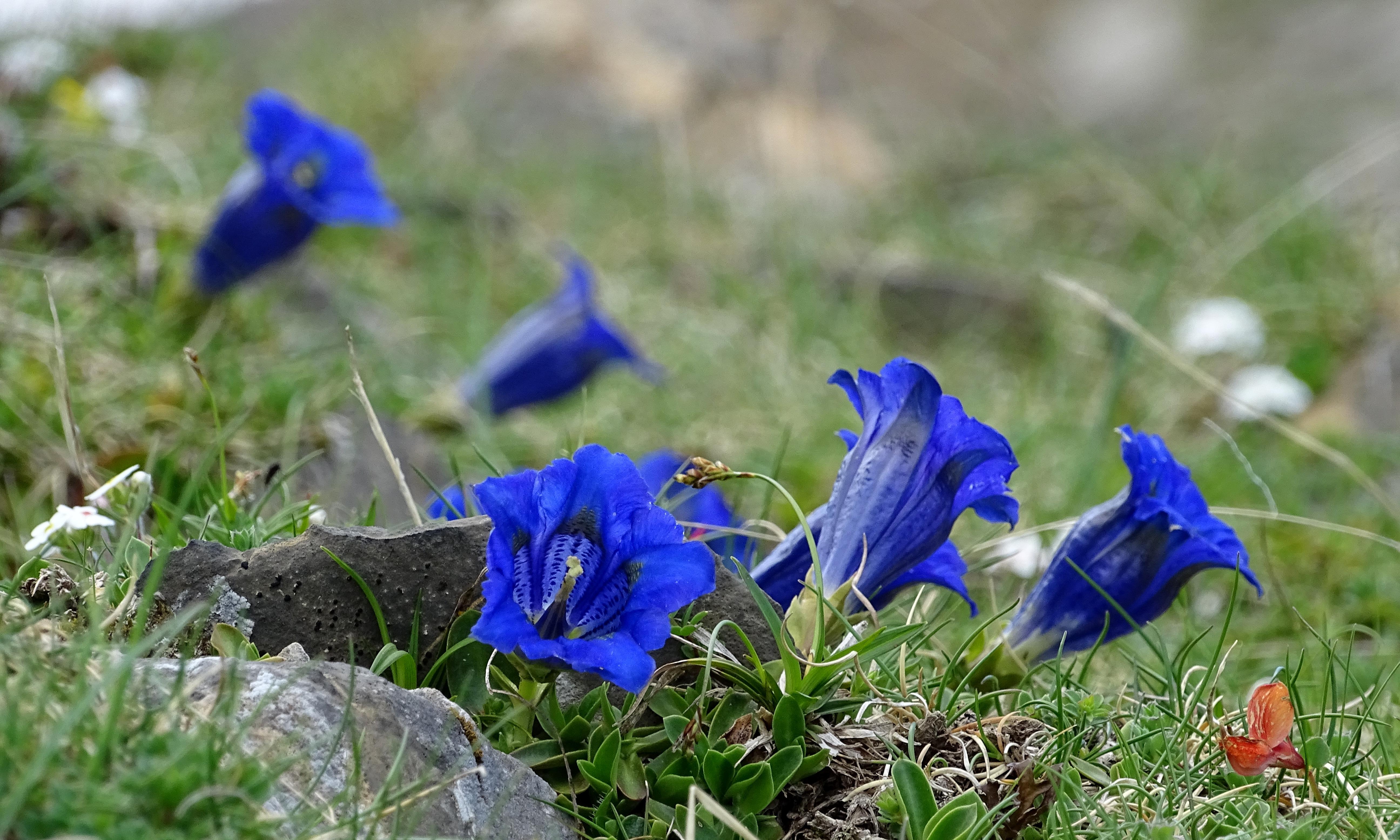 Fleures bleues | Vincent Fontan