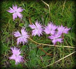 Fleures   Vincent Fontan