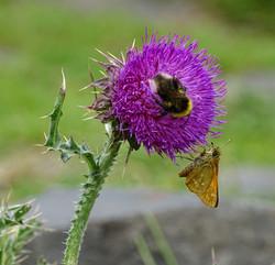 Fleure violette   Vincent Fontan