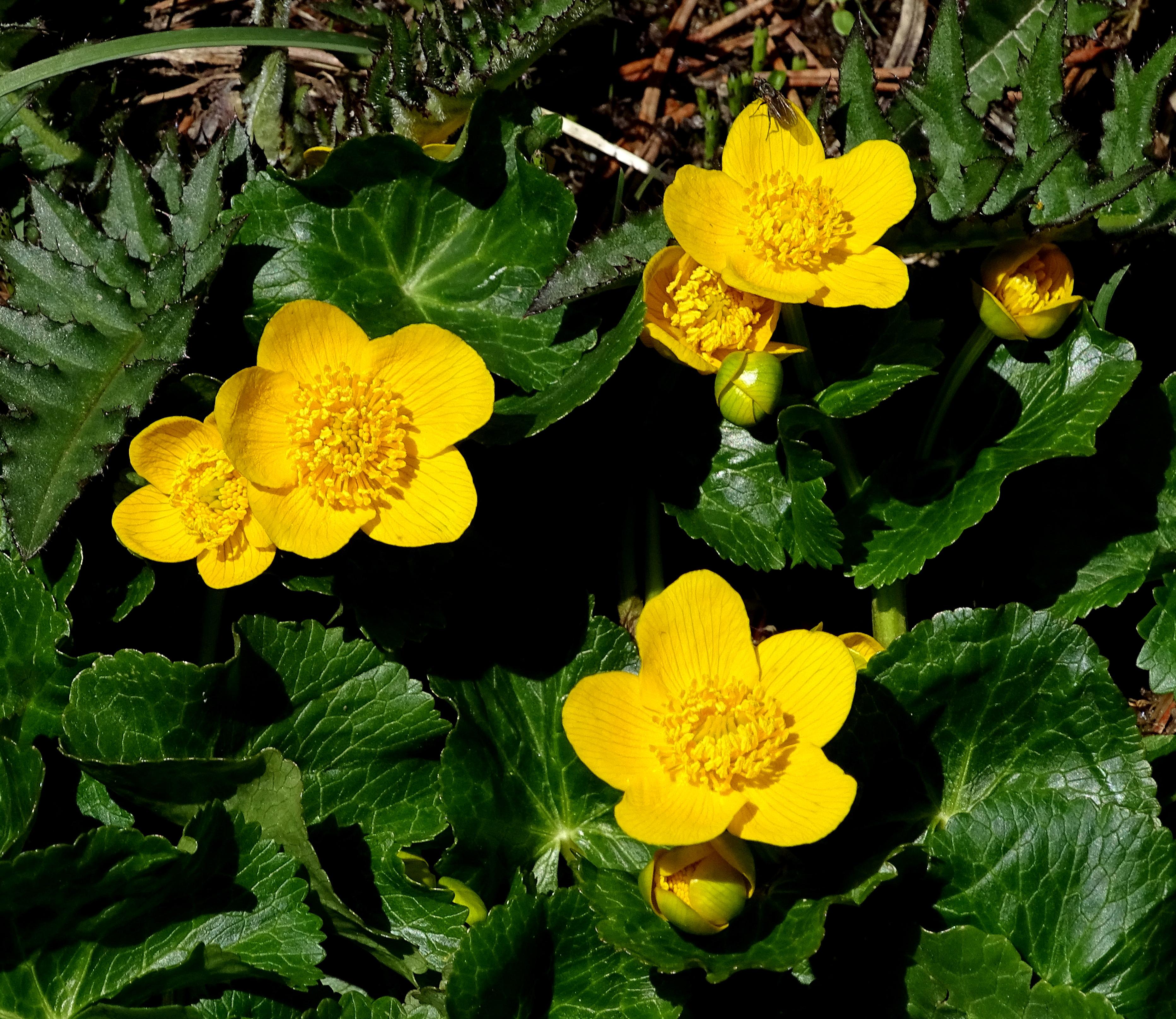 Fleures jaunes | Vincent Fontan