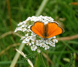Fleure et papillon   Vincent Fontan