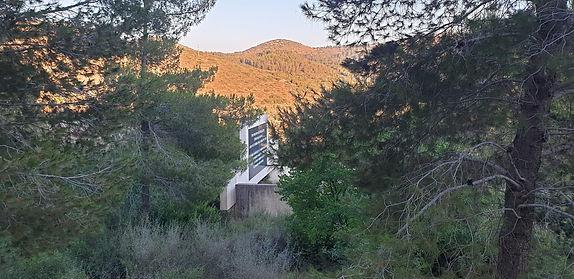 monument-jnf-forest_orig.jpg