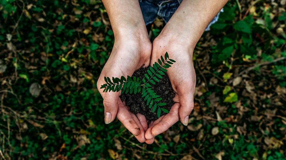 Person holding plant, photo by Noah Buscher on Unsplash
