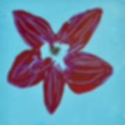 Flying Flowers (2).jpg