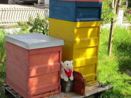 Wolli und die Bienen