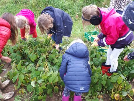Visite de la parcelle maraîchère avec les enfants de l'école suédoise du quartier