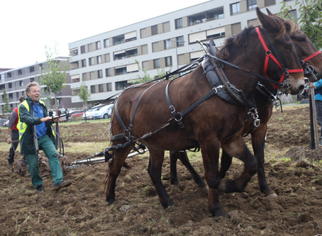 La coopérative agricole organise un semis citoyen