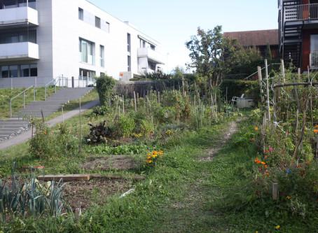 Rencontre avec les jardiniers du quartier
