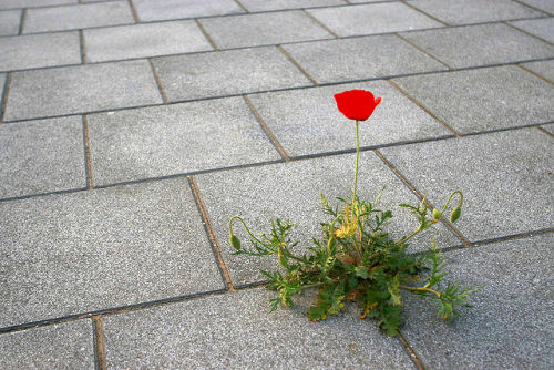 """""""Like a rose growing through concrete"""""""
