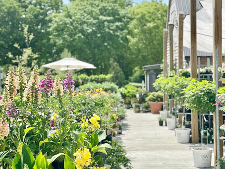 Long Hollow Gardens