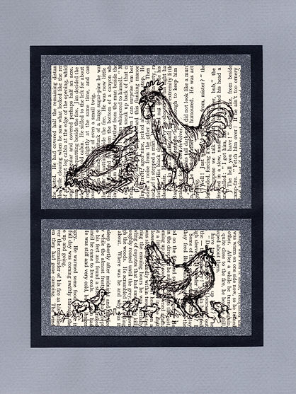 original sketches illustrations chickens rooster