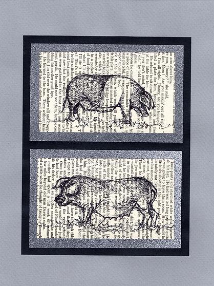 original sketches illustrations pig pigs saddleback