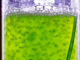Total, Veolia to develop CO2-based algae cultivation for next-gen biofuels