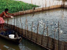 Green Fuels wins grant for fish waste-to-power generation project in Vietnam