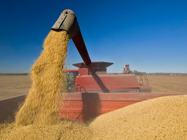 US soybean production up from September