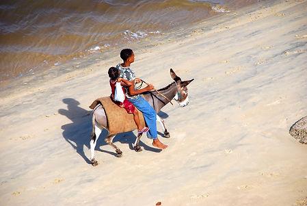 donkey-man-girl-beach.jpg