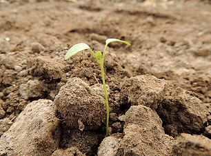 plante-germe-graine-terre-brune-cultiver