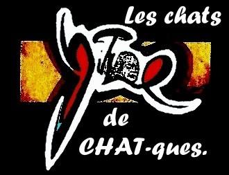 Z CHAT (2).jpg