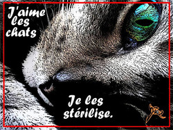 Protection animale, chats.