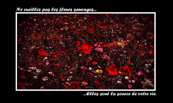 fleurs sauvages.jpg