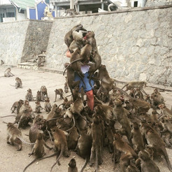 Advice for young traveler How to feed monkeys