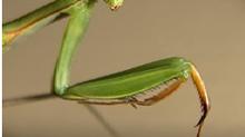 Почему насекомые не чувствуют боли?