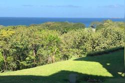 bougainvillea_4105_ocean_views