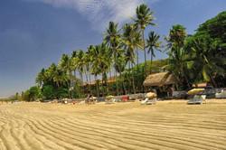 tamarindo_beach_palm_trees