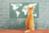 Education funny idea with red cat before