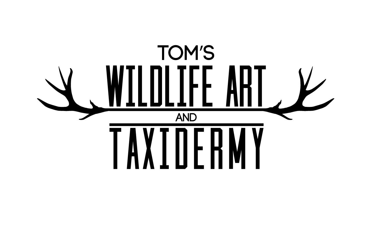 Tom's Wildlife Are And Taxidermy