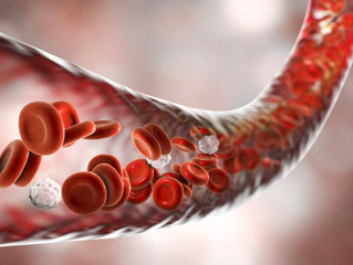 Maximizing Your Blood Vessel Health