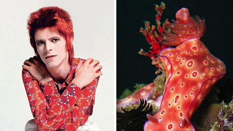 This is called BowieBranchia. A brief iconography of the ocean and the late, great David Bowie.