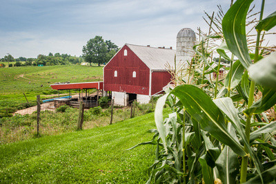 Are You Eligible for New USDA Grant for COVID Response Expenditures?
