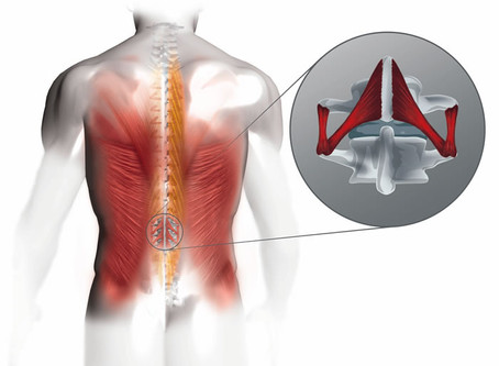 Tiefe Rückenmuskulatur