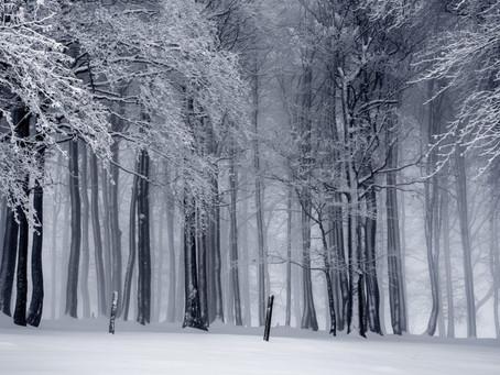 Gesund durch die kalte Jahreszeit