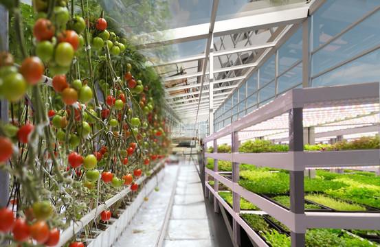 PROJECT T.H.R.I.V.E. - Greenhouse