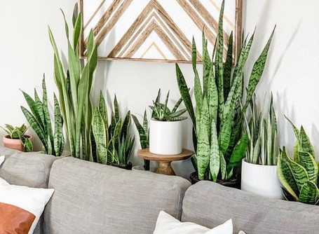 BIOPHILIC DESIGN | Indoor Plants 🌱 more than just a pretty leaf!