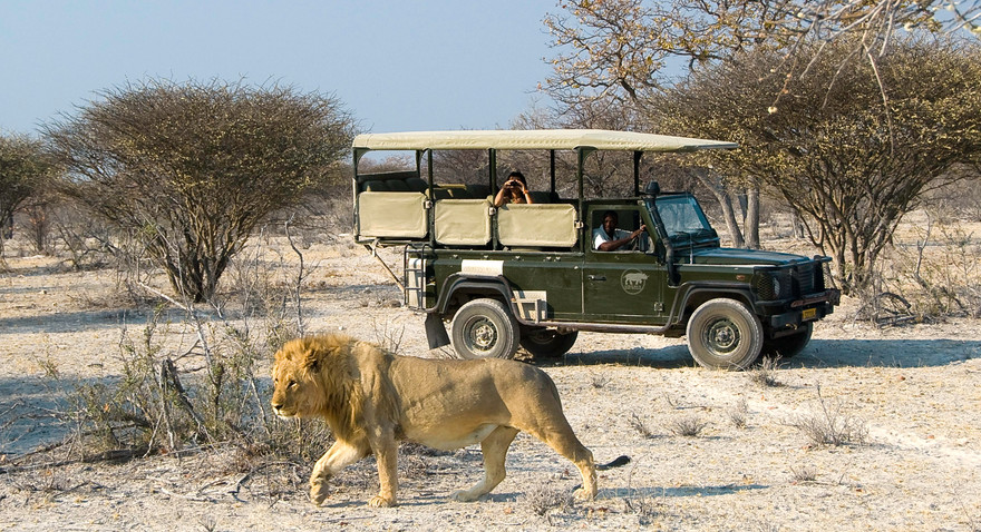 lion-on-game-drive-from-ongava-lodgejpg