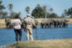 Wilderness Safaris - Hwange Walking Trai