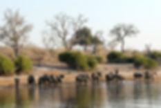 botswana-693440_1920.jpg