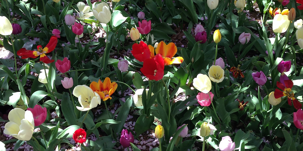 The Art of the Garden: Bulbs with Liz Campbell Kelly and Lindsey Taylor