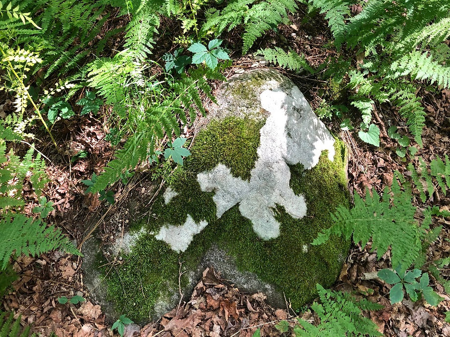 Moss and Lichen.jpg